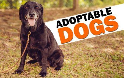 Adopt a Dog copy